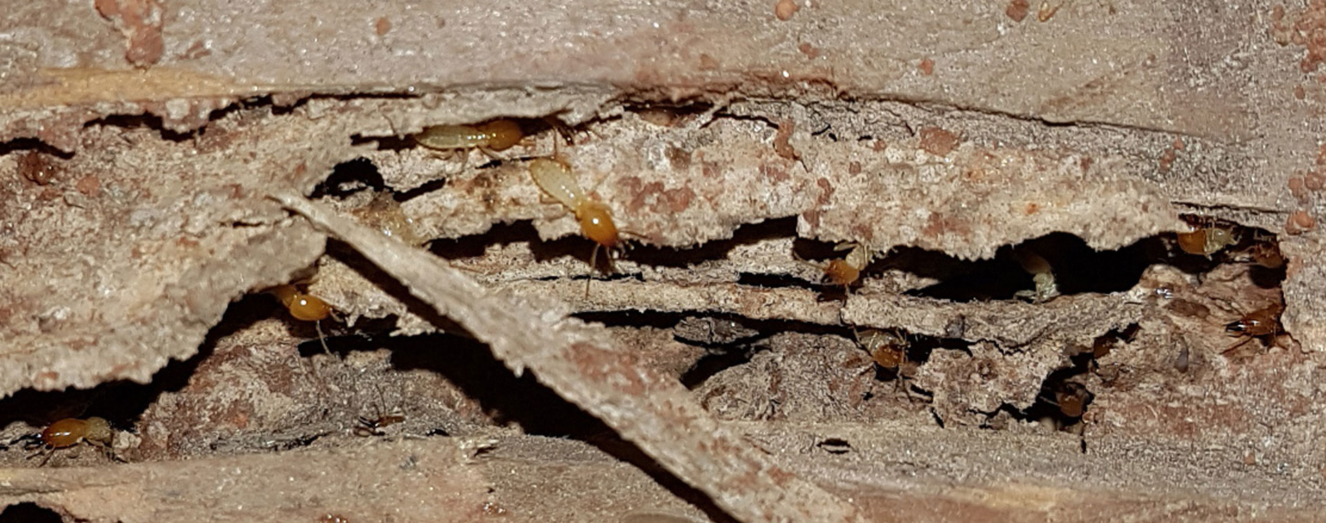 Spiders and Cockroaches Control